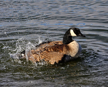 Splish...splash...I was taking a bath!!!