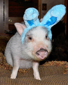 Bernie kinda liked his bunny ears!!