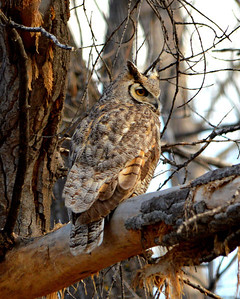 I just love owls...they are so cool!