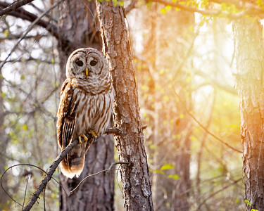 I saw this beautiful barred Owl while out walking in the woods!