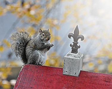 Gotta love those squirrels!