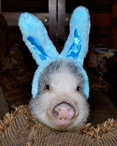 Happy Easter to you all...Hope your day is wonderful!!