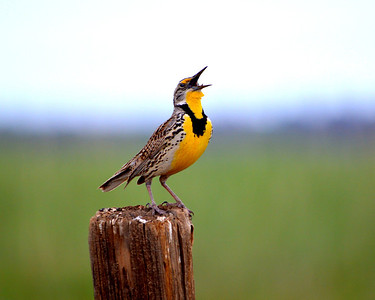 Singing away!!