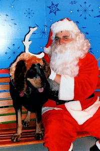 LOL..I didn't take this, the people at Petsmart did, but I had to share it with you! We dressed Jackson up like Max(the grinch's dog) and took him to have his picture made with Santa! He was wearing a Grinch shirt also, but you can't see it in this one.