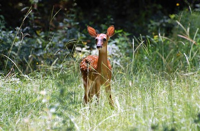 """"""" Bambi""""  We went riding in the woods today and came across this cute little baby deer."""