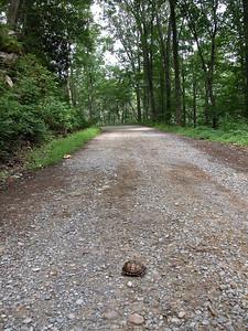Random turtle