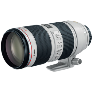 The Canon's 70-200 f/2.8 L IS lens is great for close up wildlife photo situations. The Autofocus system is fast and resulting images are sharp. Canon's  pro L lens also is resistant to dust and moisture.  The image stabilization feature sometimes helps for hand held shots that would normally need a tripod.  I use this lens often for field shots of up close mammals, when a tripod is not practical.
