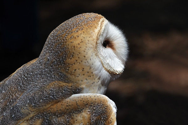 """Another image from """"Raptor Day."""""""