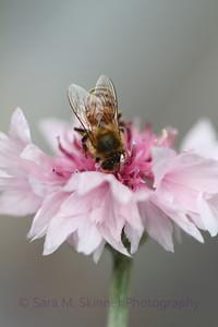 Pollen Power