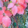 Fall Color.<br /> <br /> One of my favorite pictures, Larry Trzaskus