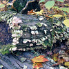Mushrooms in Kettle Moraine State Park, WI.<br /> One of my favorite pictures, Larry Trzaskus