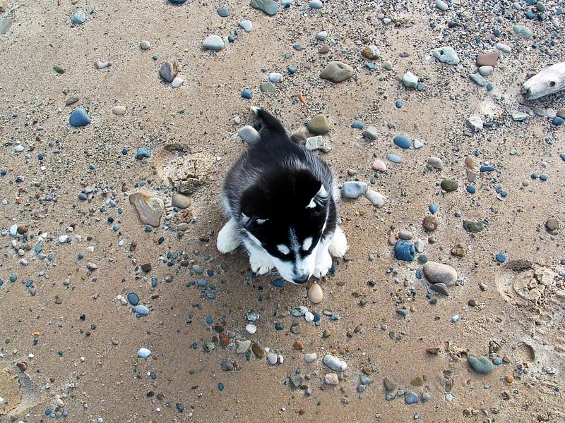 puppydunes2006_0201(006)a
