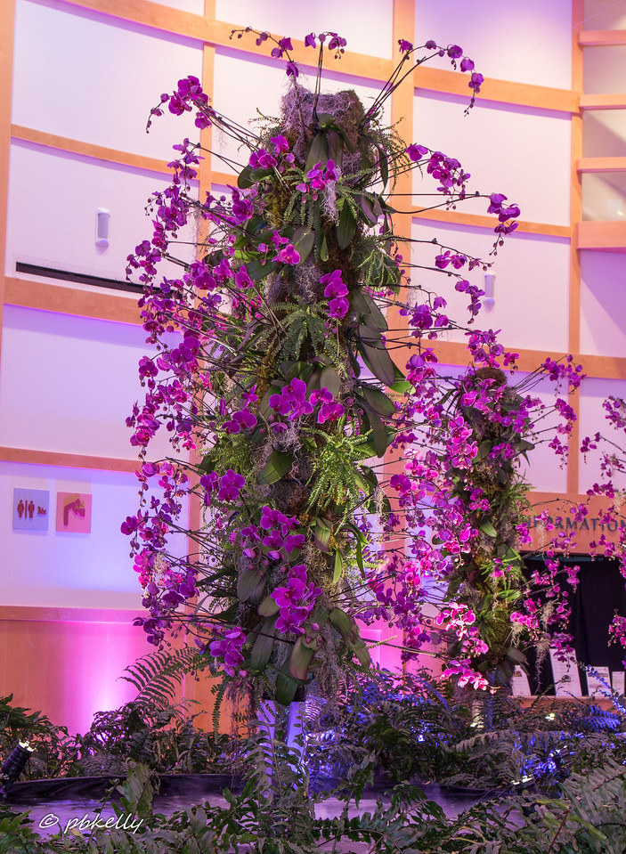 2-07-2017.  Back to CBG for evening Photographer's hours.  We were mostly confined to the  Lobbies since the light in the greenhouses was totally inadequate.  The theme was hanging gardens and I could really do without the pink and blue lighting.  Played with off- camera fill flash.