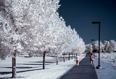 A Walk in Wonderland IR - 2020