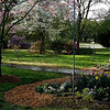 Our front yard in early April.  Eden