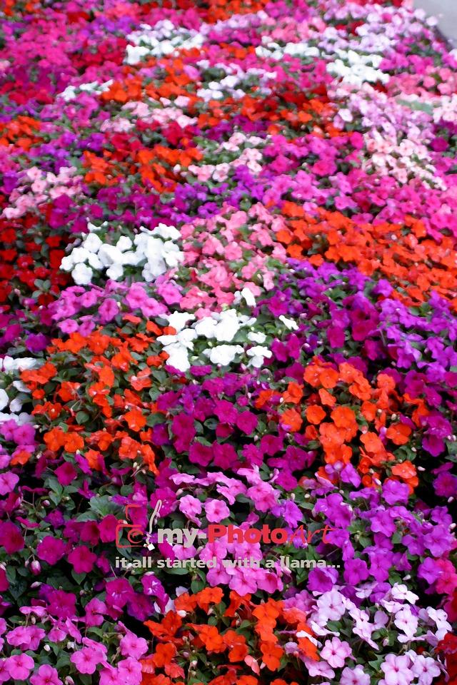 YOUR Garden.  Your Masterpiece!