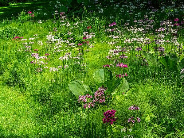 Wildflowers at Chanticleer