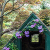 Wisteria House at Chanticleer