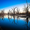 Red Gum Blues - Time to reflect.............