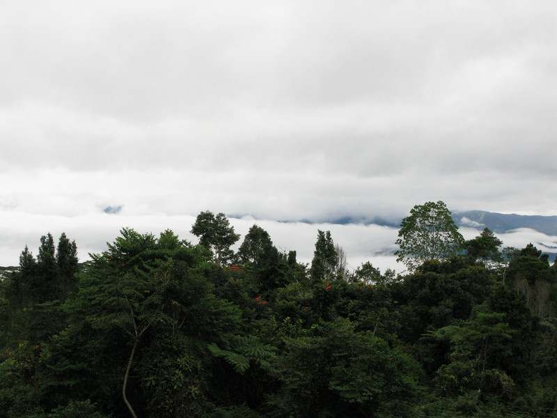 Mt. Kitanglad, January 2009<br /> <br /> Sea of clouds.