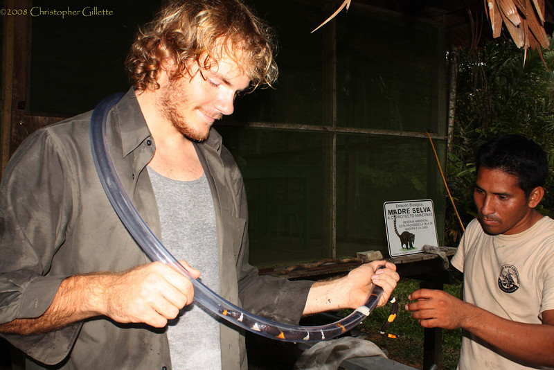 Measuring an orange ring coral snake I caught in Peru.