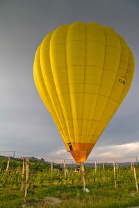 "I decided to post this in My Smug Mug, based on the ""things I've seen"" header. Watching a hot air balloon do an emergency landing in the Cru vineyards of Barolo is just plain memorable. I happened to be with an 84 year old gentleman, a former mayor of La Morra, who'd lived here all his life - he'd never even heard of such a thing, let alone seen it in his own back yard. Incredibly, not one vine was damaged. The margin for error was less than 2 meters on each side of the basket of the balloon. Wow."