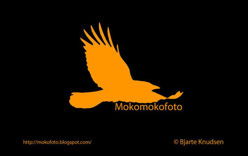 Logo Mokomokofoto video