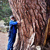 """An old veteran meets """"Old Veteran"""", a landmark tree near Taylor Creek on Lake Tahoe. Old trees are like old friends, they deserve a hug!"""