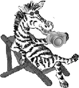 Photo Lounge Zebra copy
