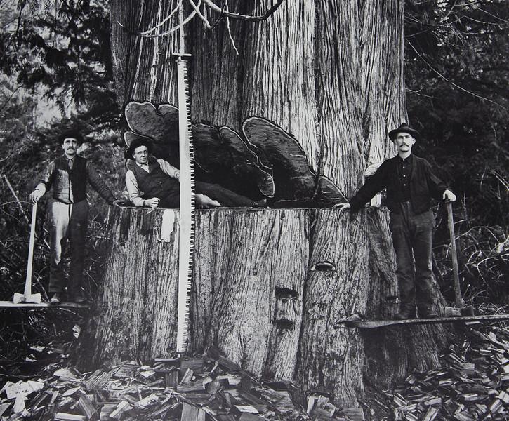 Getting a little firewood.