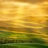 golden_light_palouse.jpg