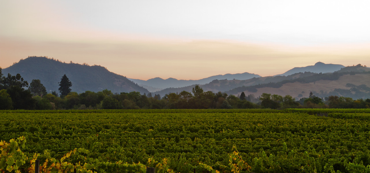 taken along Westside road in Russian River Valley, at daybreak
