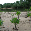 Sabang, Palawan<br /> <br /> After the tour of the mangroves, each person gets to plant a mangrove seed.