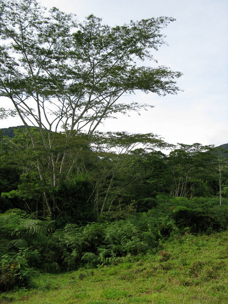 January 2009<br /> Mt. Kitanglad, Bukidnon