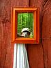 mirror self-portrait