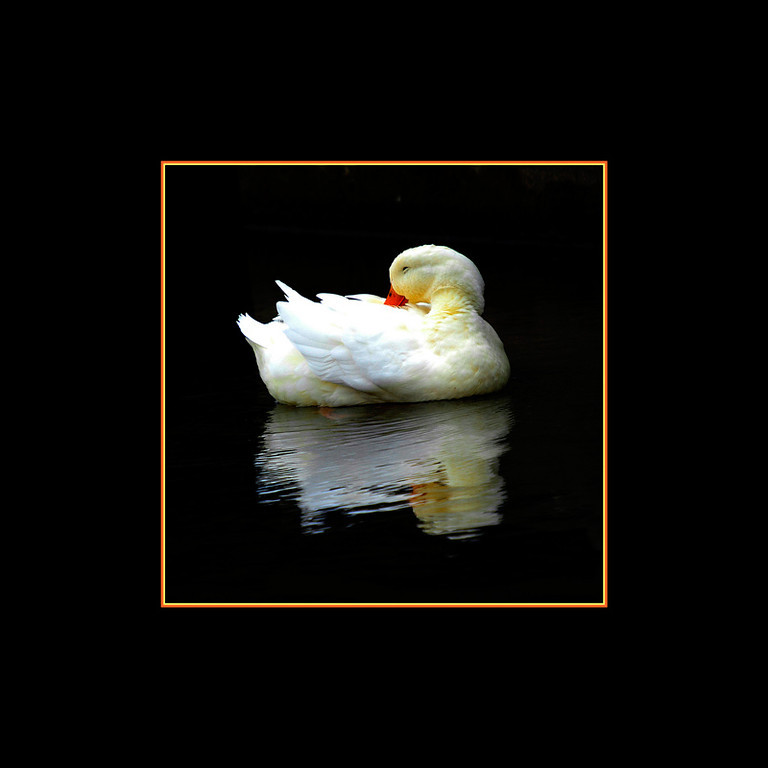 Goose on Creek