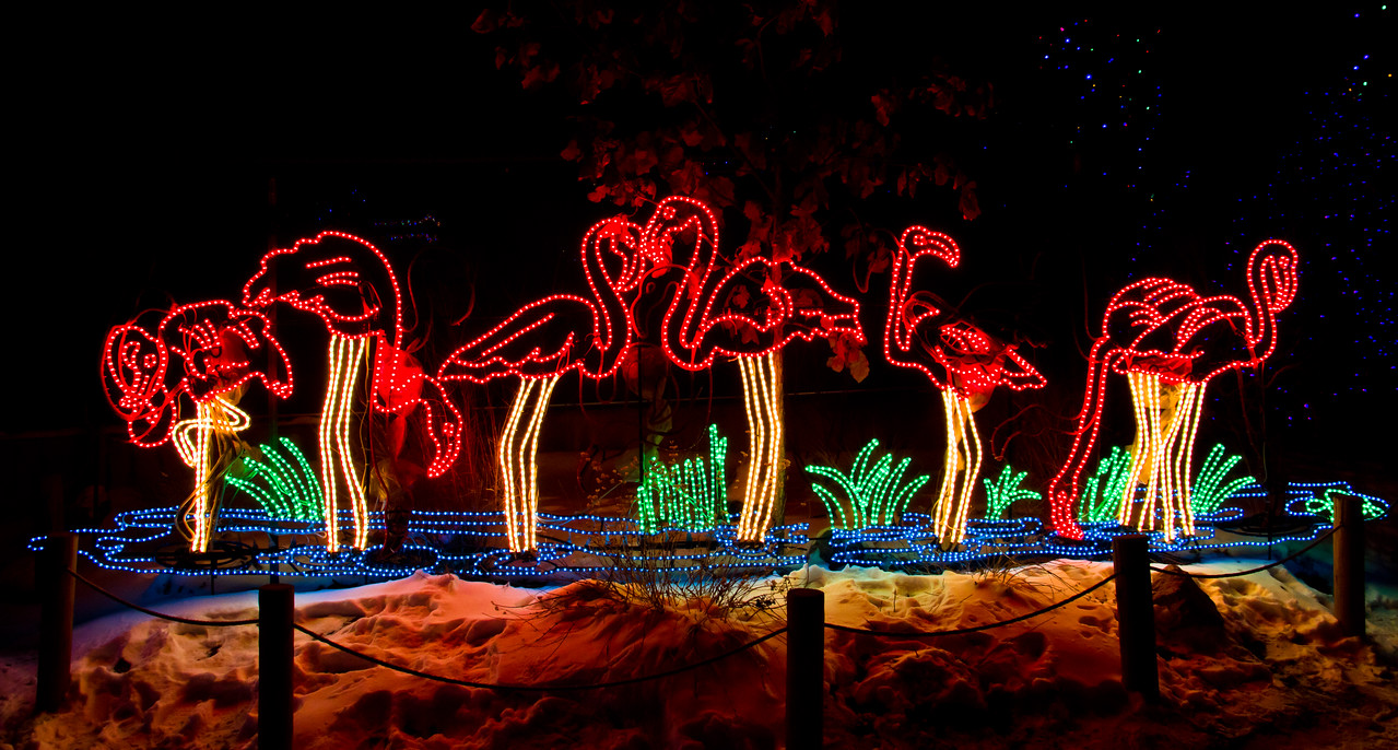 Denver Zoo Lights, an annual event, winter 2010-2011 (about 0F when I took this picture).