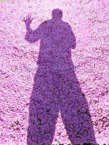 D portrait floral