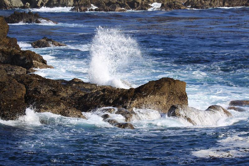 20090508_hwy-1-pt_lobos-bird-island-030