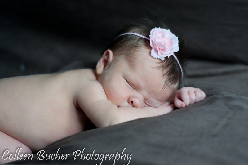 Harmer (Newborn) 282