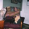 tippahcats