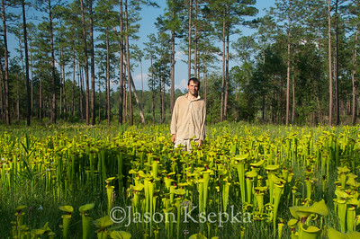 Me surrounded by Sarracenia flava, Yellow Pitcher Plant; Okaloosa County, Blackwater River State Park, Florida