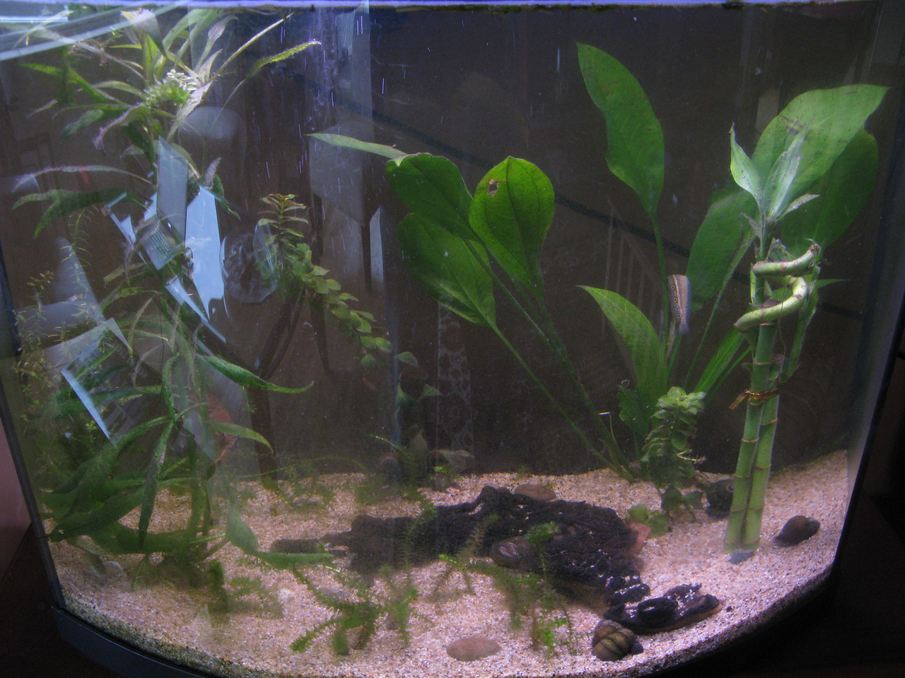 More than just a fish tank, This tank is filled with native hand cought critters. Including, small mouth Bass, 2 Torrent Sculpin, Snails, 30 freshwater clams, 2 crayfish.