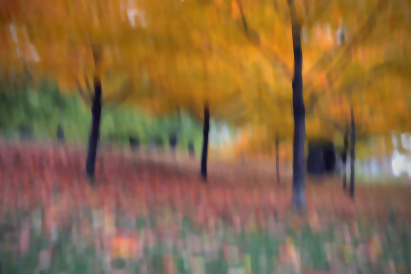Actually in Montreal, Parc Mont-Royal, October 23, 2009<br /> <br /> It starts with the autumn leaves, a cloudy day, and a long exposure while the camera is falling towards the ground.