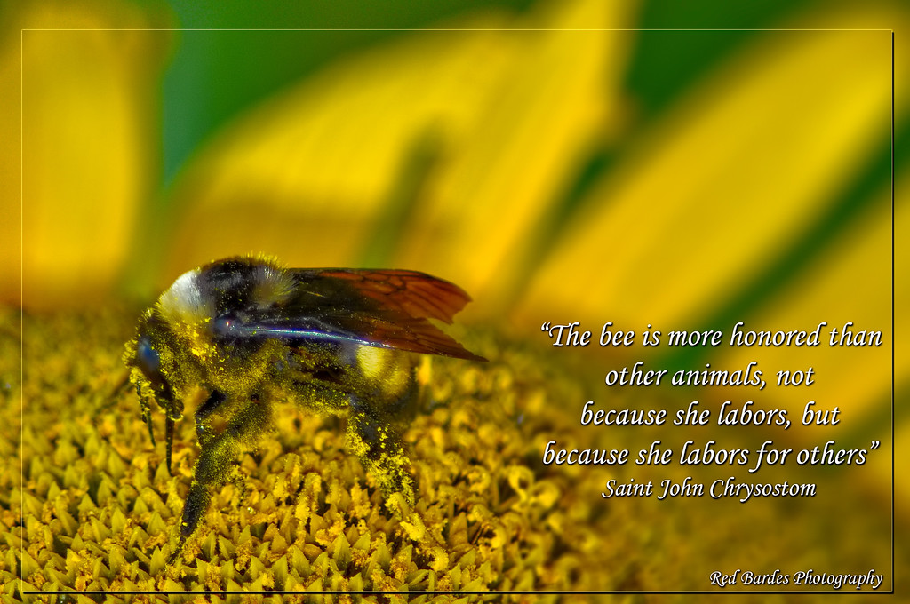 The-Bee-Labors-NOISE-OUT