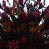 DSC_02812008-03-30