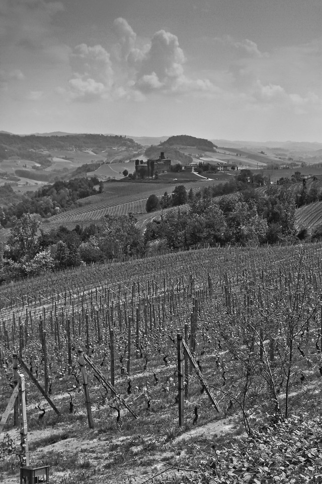While standing in the Cerequio Vineyards in the winegrowing region of Barolo, one can see this view, which is looking South/Southeast. In the distance, in the upper third of the picture, you can see a gap between two opposing hills. This gap is where the road from Castlglione Falletto passes through to the small village of Barolo.