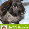 header-bunny