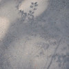 A shadow of leaves cast on the pavement.  This is from another hike to Sengokuhara in Hakone.