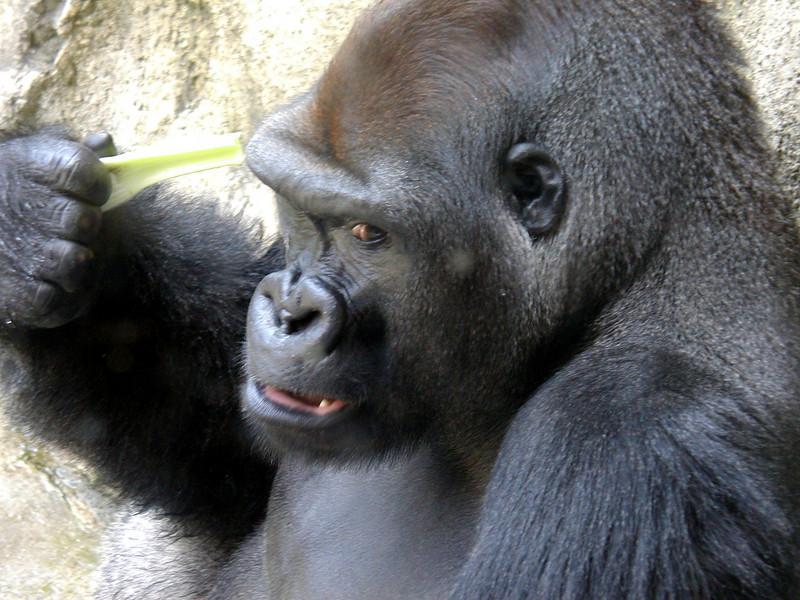zoo 5 8-21-03